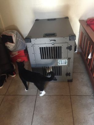 Alan_D_heavy duty dog crate testimonial photo