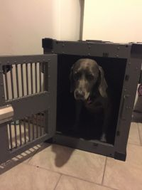 Heavy Duty Dog Crate High Anxiety from CarryMyDog.com