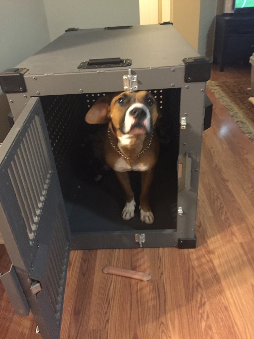 banner_with_High_Anxiety_heavy_duty_dog_crate_from_CarryMyDog.com