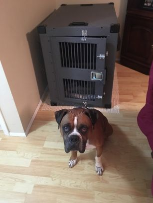 Keptner_Heavy Duty Dog crate testimonial image