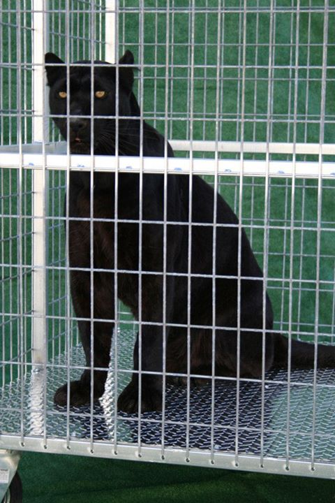 Cat in a Heavy Duty Dog Crate