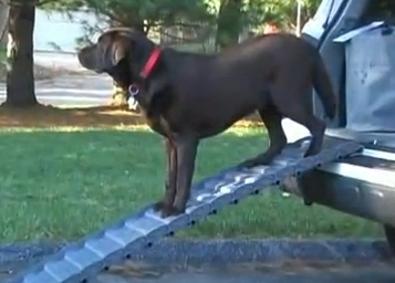 Dog Standing on Ramp4Paws