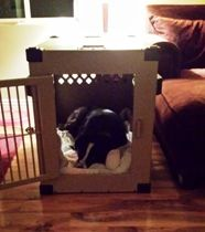 Jeanna's dog in heavy duty dog crate in California from CarryMyDog.com