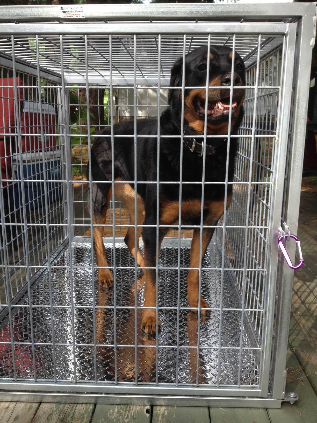 Joe in his heavy duty dog crate with 6 guage steel wire