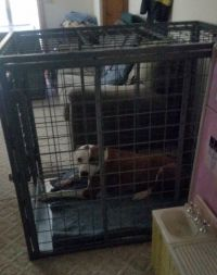 Xtreme heavy duty dog crate & Winston