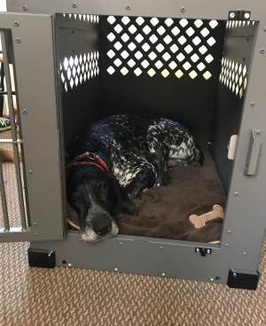 Ranger in his new heavy duty dog crate from CarryMyDog.com