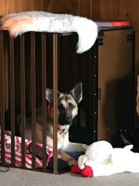 Savi loving her new heavy duty dog crate from CarryMyDog.com