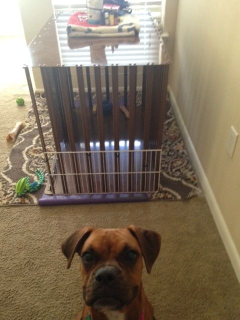 Heay Duty Dog Crate from CarryMyDog.com