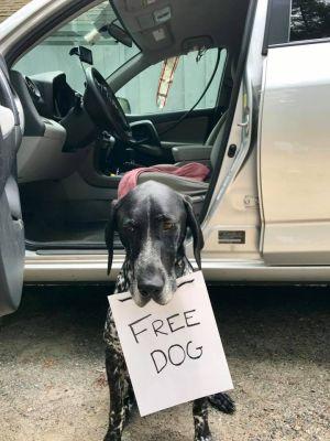 Ranger Free Dog